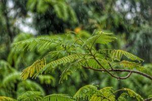 1.雨の日キャンプに必要なもの【雨対策】