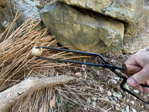 テオゴニアの炭バサミを使って1年後の状態